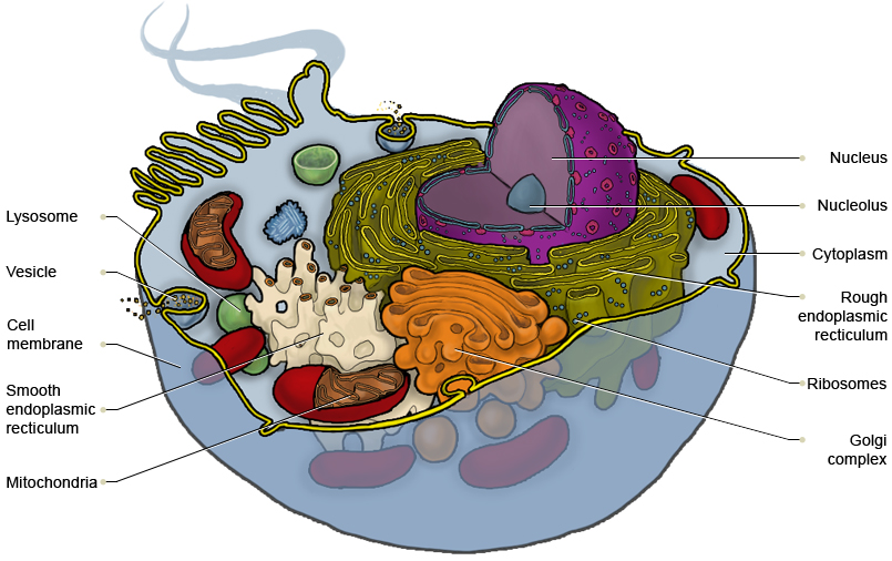 Cell sectional view