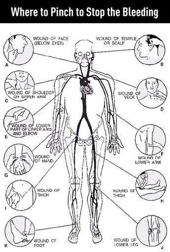 The pinch for stop bleeding position in the human body