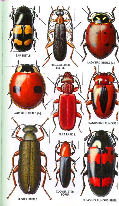 Different Types Of Insects Beetle External Anatomy