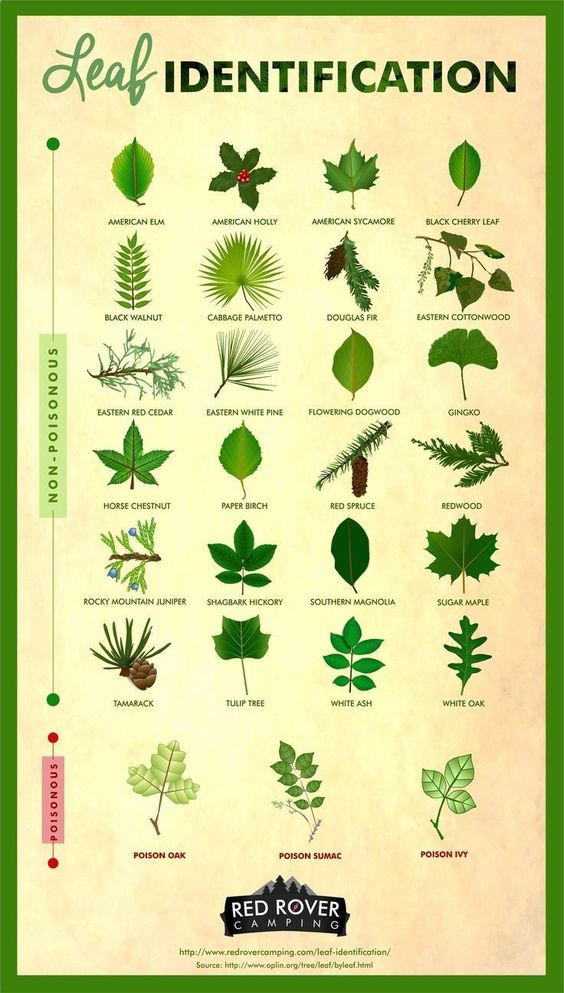 Different Type Of Leaf Identification