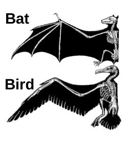 Bat Wing And Bird Wing Difference