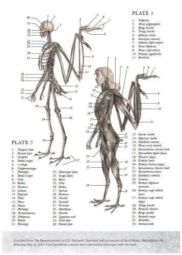 Angel Skeleton And Muscle Gross Anatomy