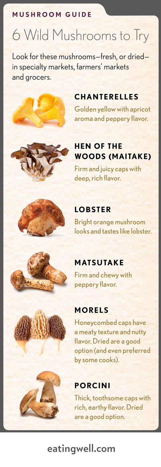 6 Wild Mushrooms Anatom
