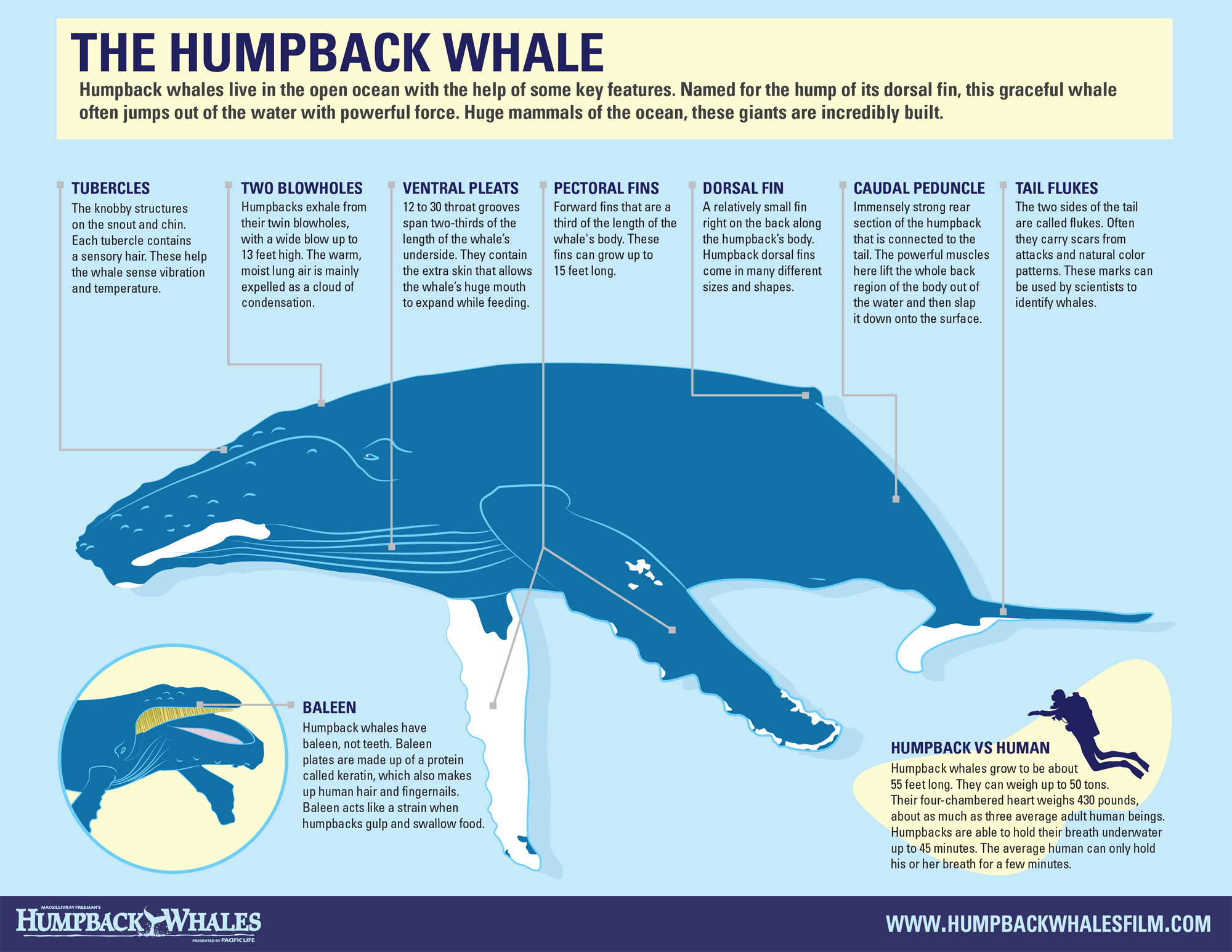 Humpback Whale Introduction
