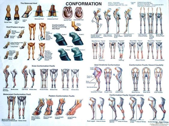 Different Types Of Heels And Legs Of Animals