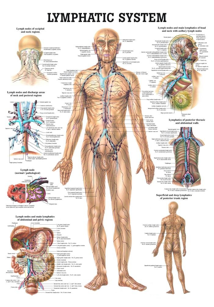 Lymphatic System Introduction