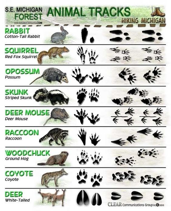 The Footprint Of Different Types Of Animal - Animal Tracks Skill