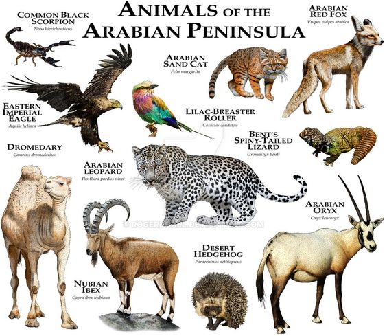 Animals Of The Arabian Peninsula