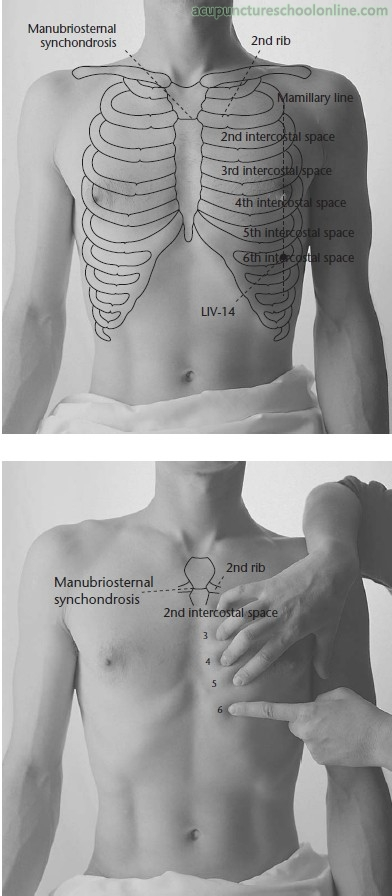 Rib Cage Location On Human Body External View