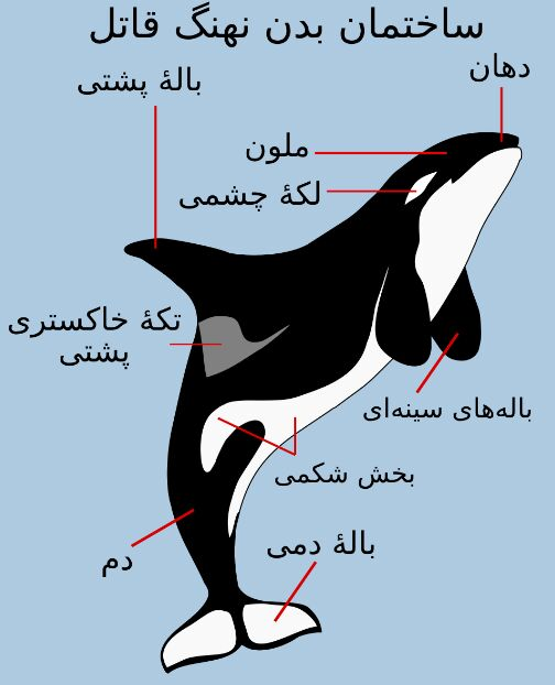 Fileorca Anatomy Introduction In Arabic