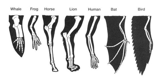 Different Types Of Forearm