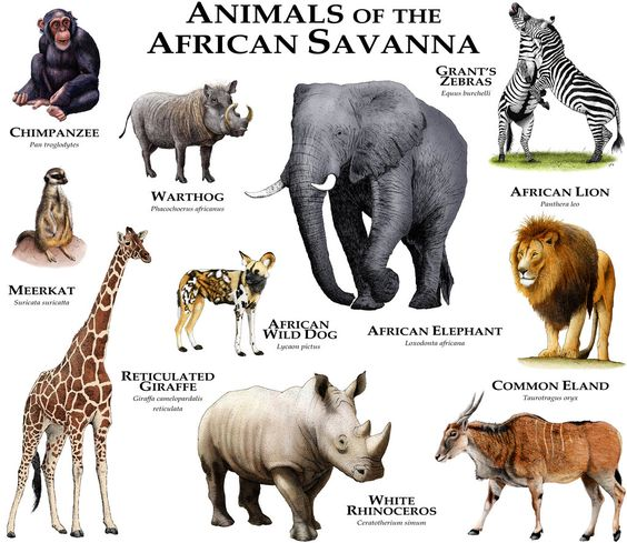 Animals Of The African Savanna