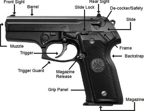 Gun Anatomical Structure