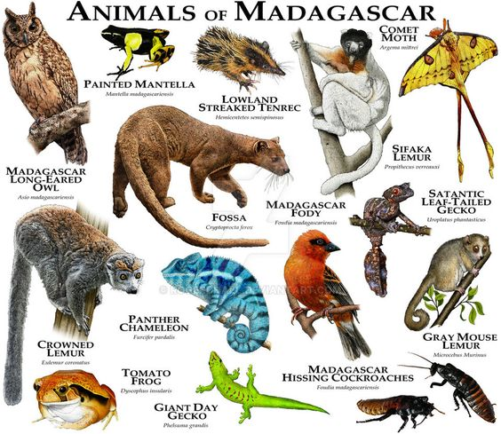 Animals Of Madagascar