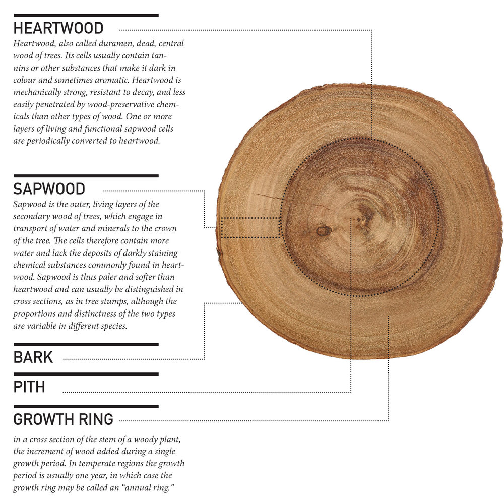 Timber Anatomy In Detail