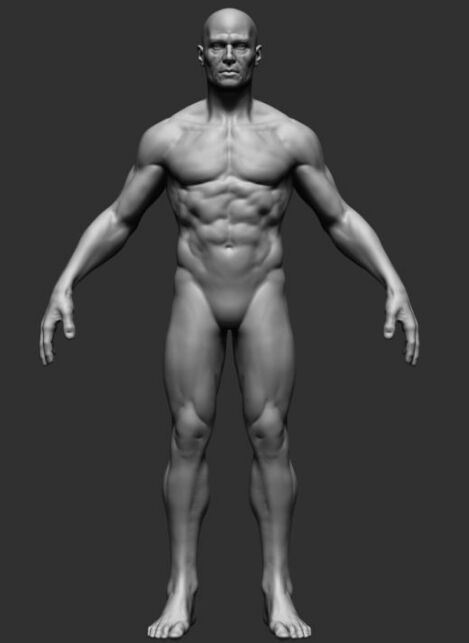 Human 3d View Anterior View