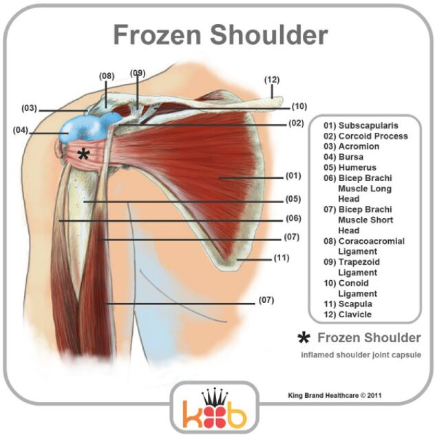 Frozen Shoulder Anatomical Structure