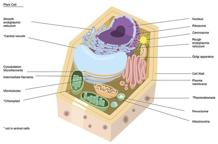 Plant Cell Anatomy