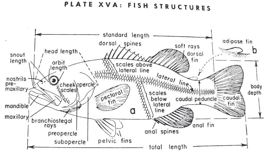 Fish Structure
