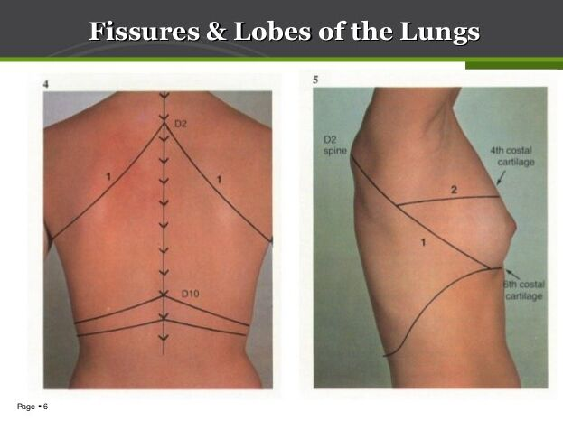Fissure And Lobes Of The Lung Landmark