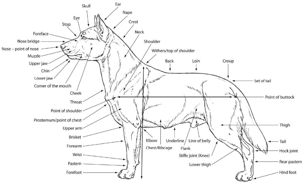 Dog External View In Detail