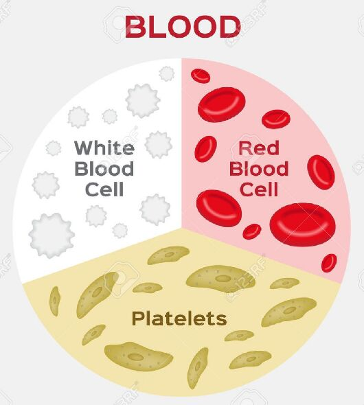 Blood Component In Human Vessel