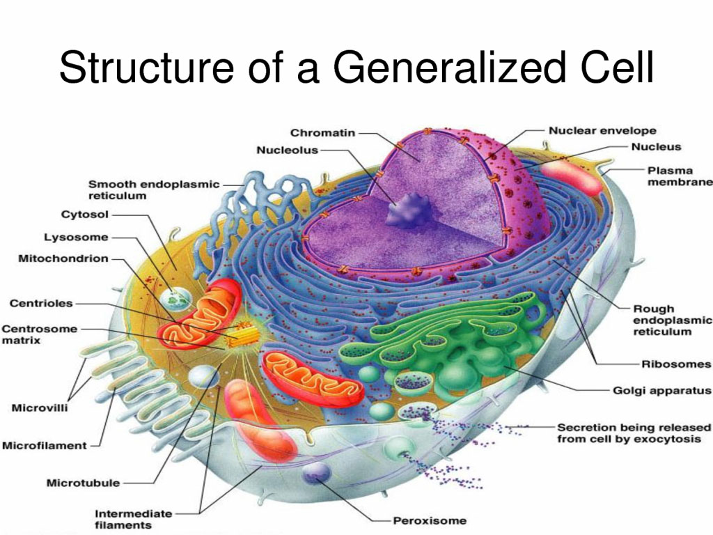 Structure Of A Generalized Cell Diagram