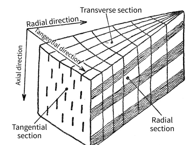 Wood Section Direction Name