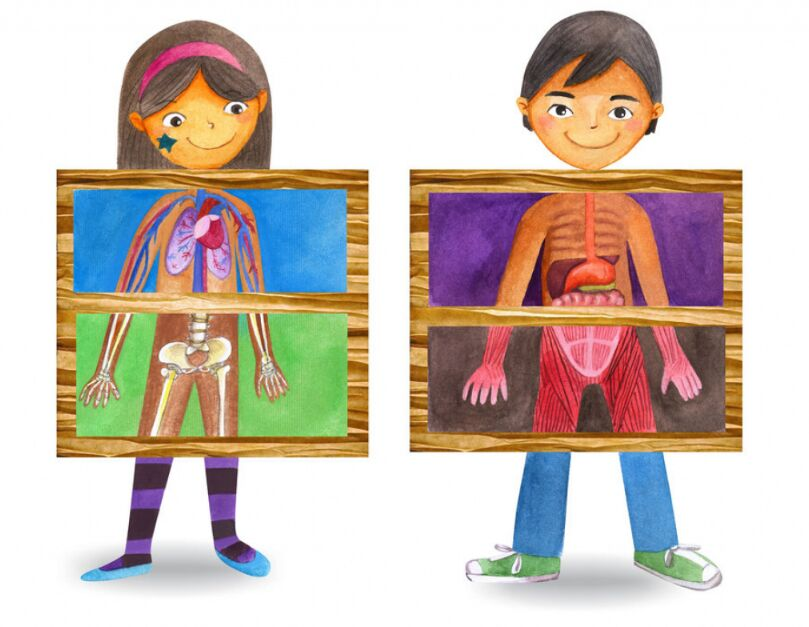 Internal Organ Of Children