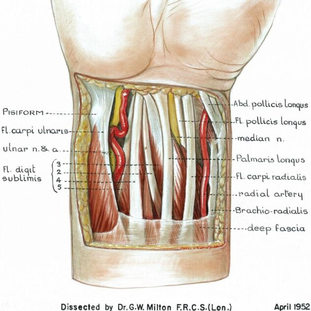 Right Wrist Structure Frontal View
