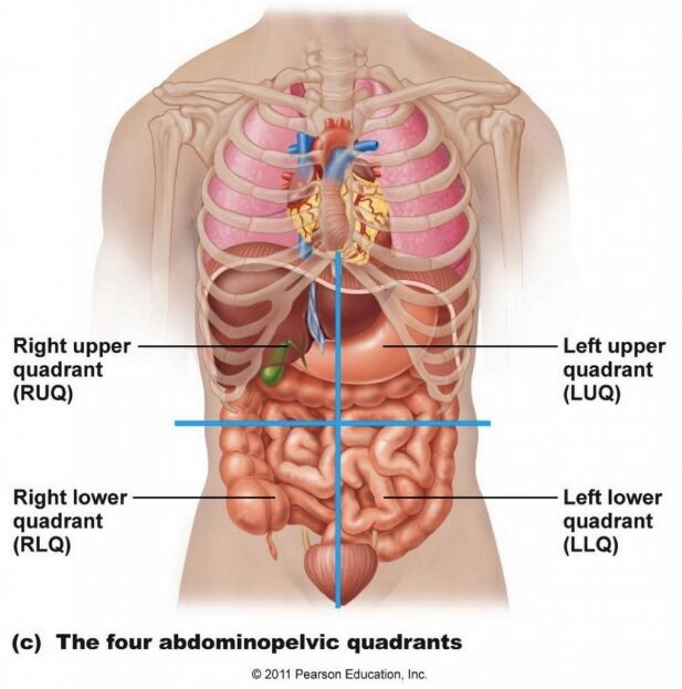 Four Abdominopelvic Quadrants Diagram