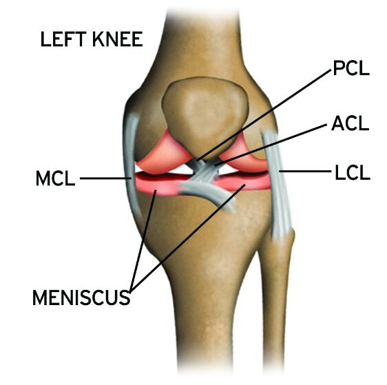 Pcl Acl Lcl Mcl Meniscus Anatomy