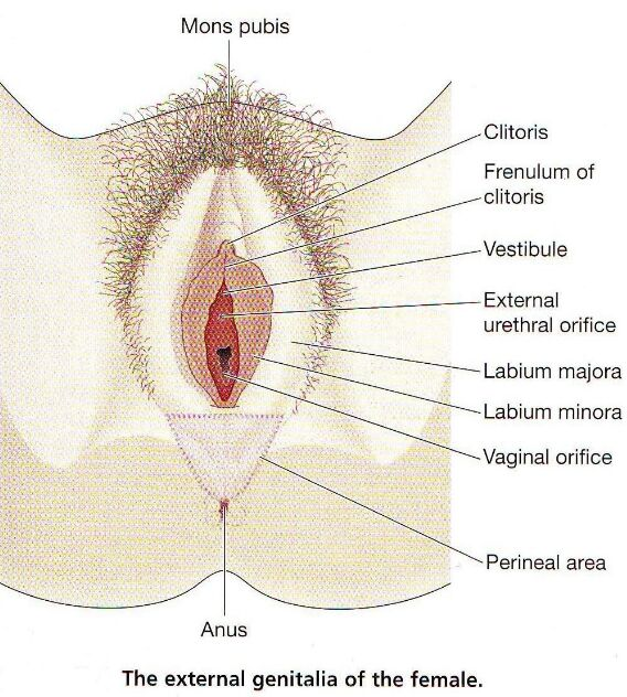 Female Adult Hairy Pussy