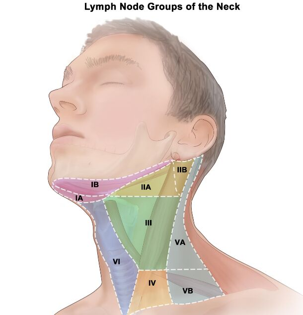 Neck Lymph Node Groups Segments