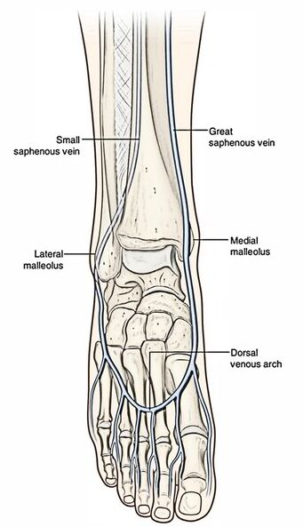 Dorsal Venous Arch In Foot
