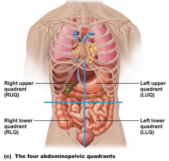 Four Abdominopelvic Quadrants