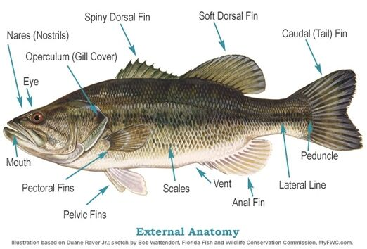 Fish Anatomy External View