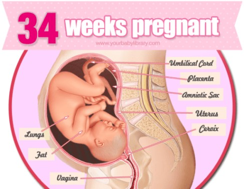 34 Weeks Pregnancy Diagram