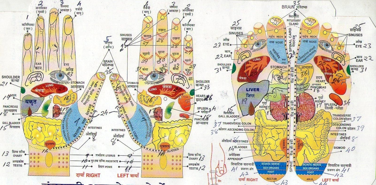 Accupresure Diagrmam Of Hand And Foot