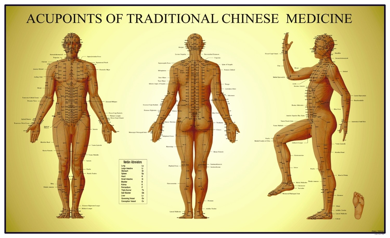 Acupoints Of Traditional Chinese Medicine Diagram