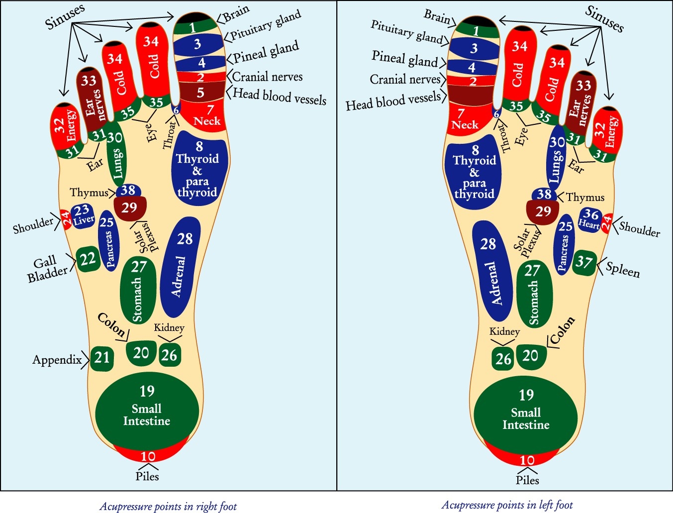 Acupressure Points In The Foot Diagram