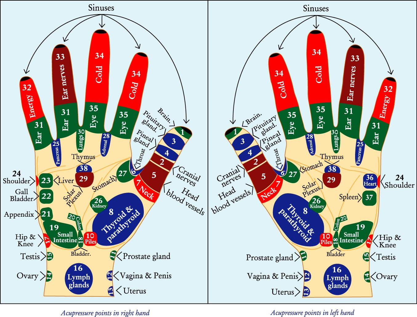 Acupressure Points In The Hands Diagram