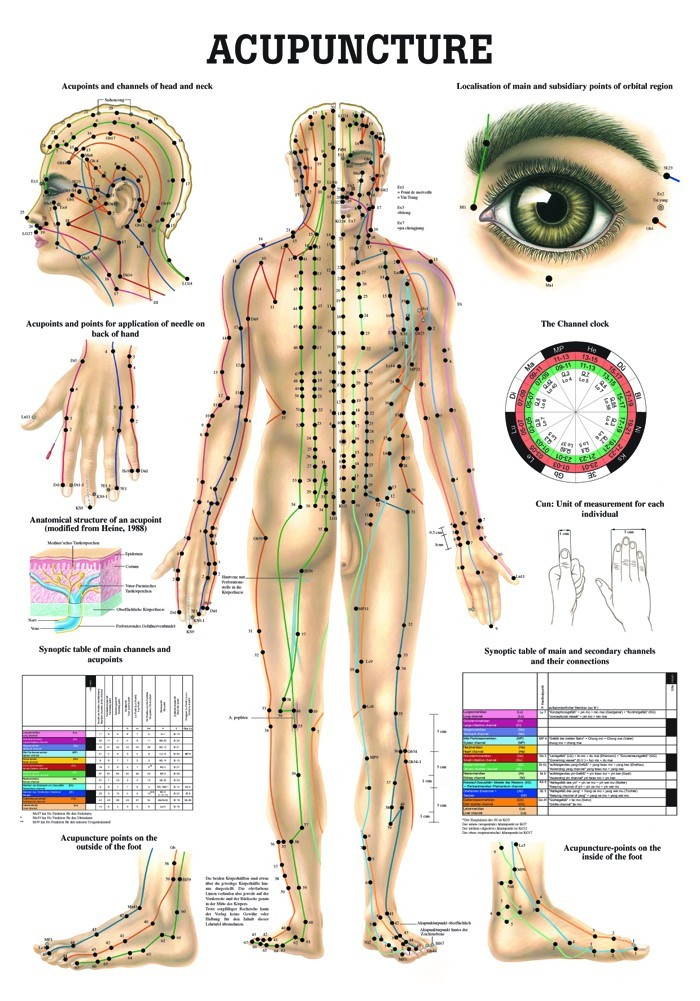Acupuncture Human Body Diagram