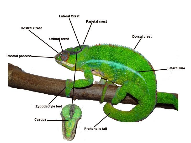 Chameleon External View Diagram