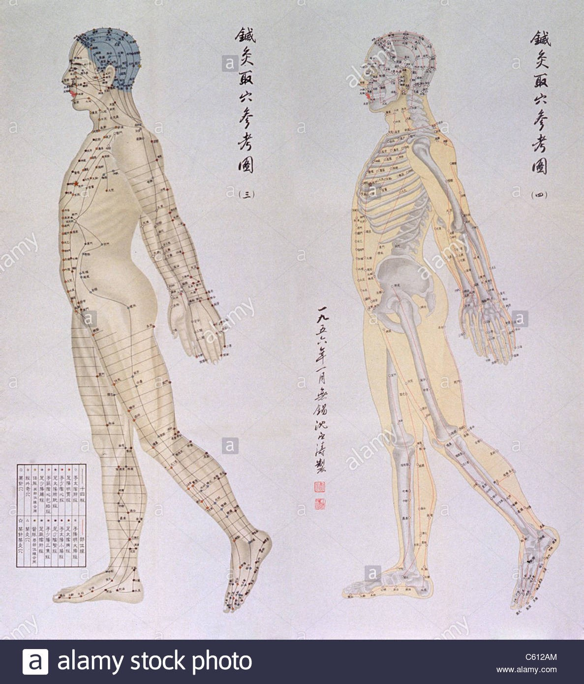 Chinese Traditional Acupuncture Diagram Lateral View