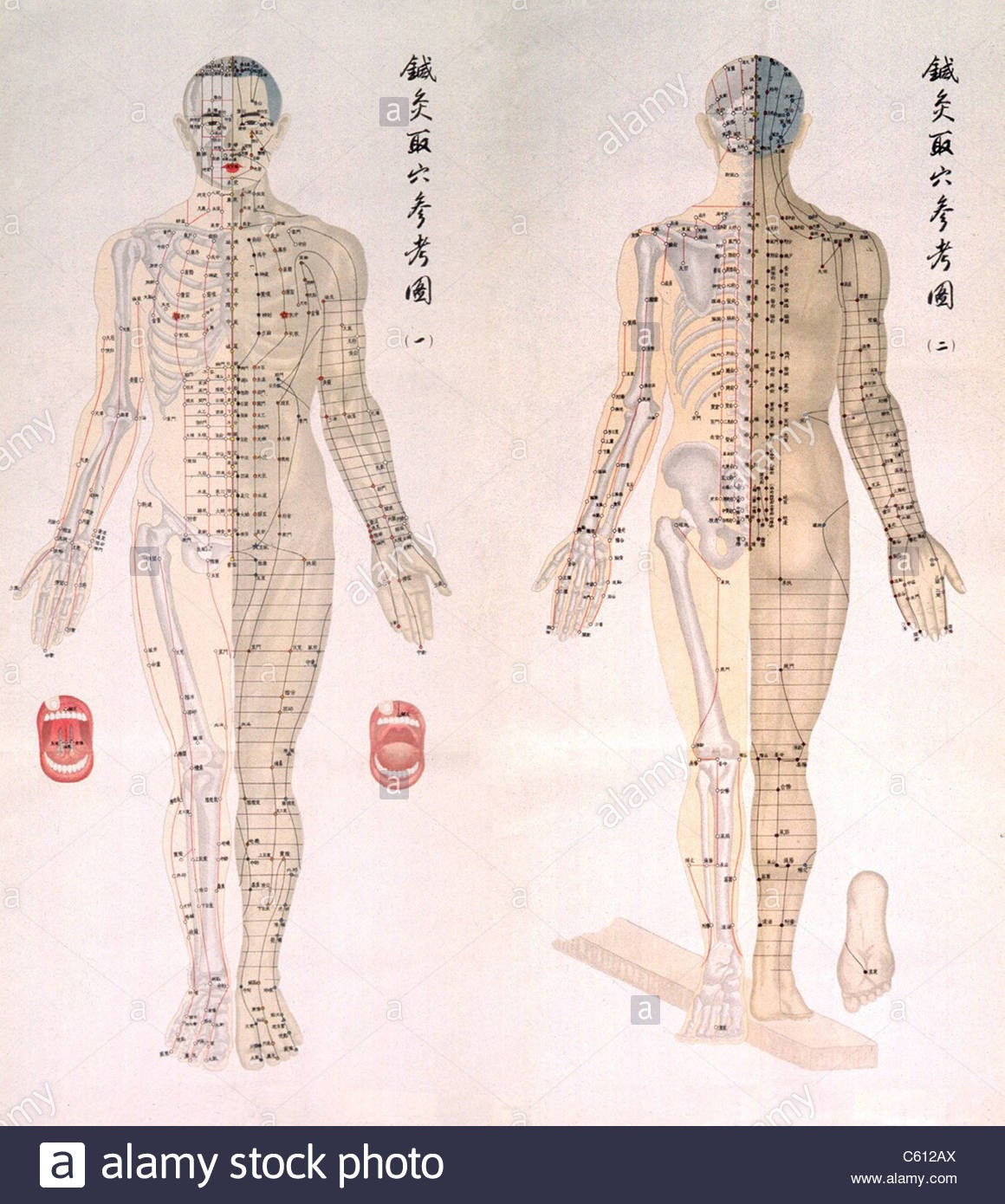 Chinese Traditional Acupuncture Diagram