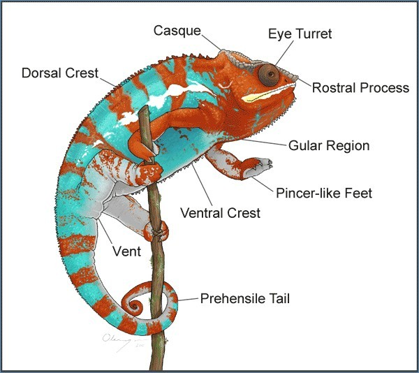 External View Of Chameleon Diagram
