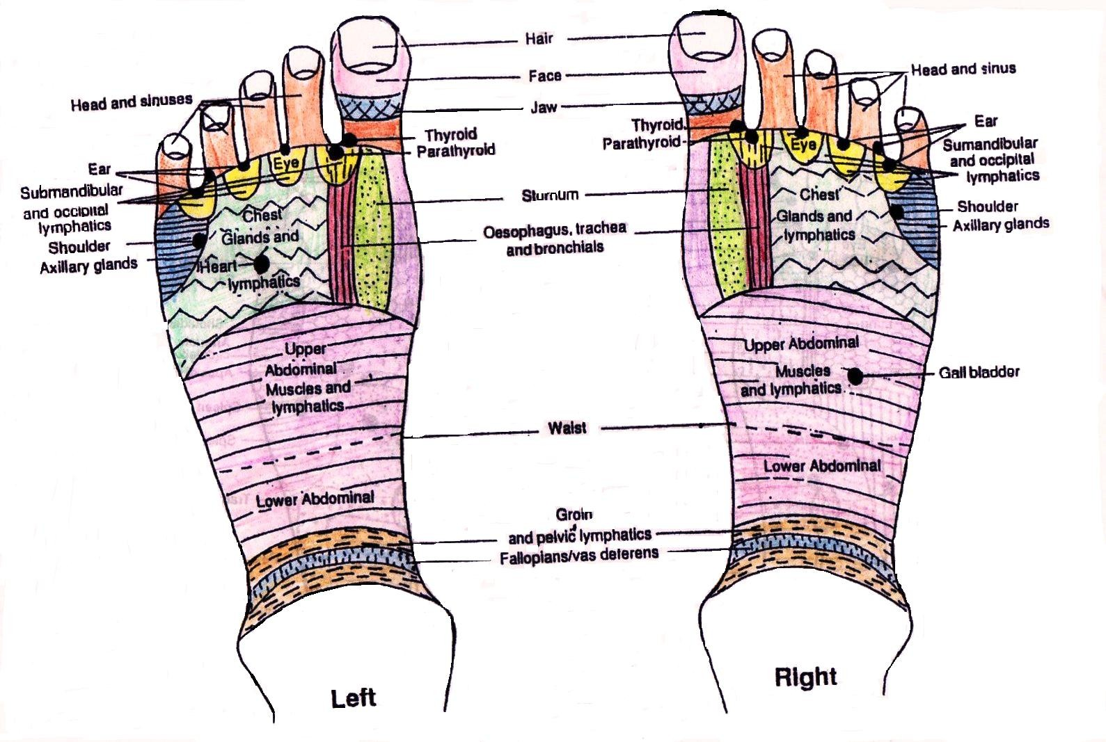 Foot And Organ Relation Diagram