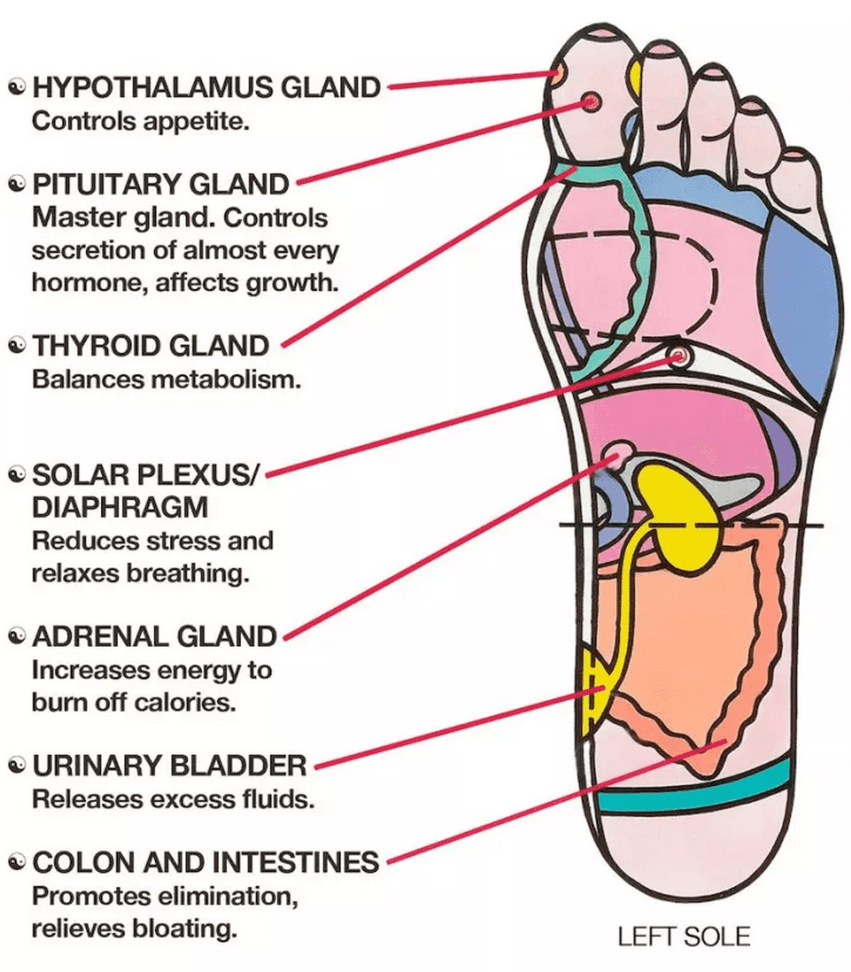 Left Sole And Organ Points Diagram