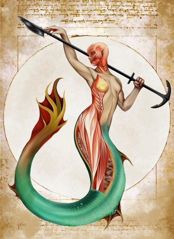 Mermaid Anatomy Muscle Diagram